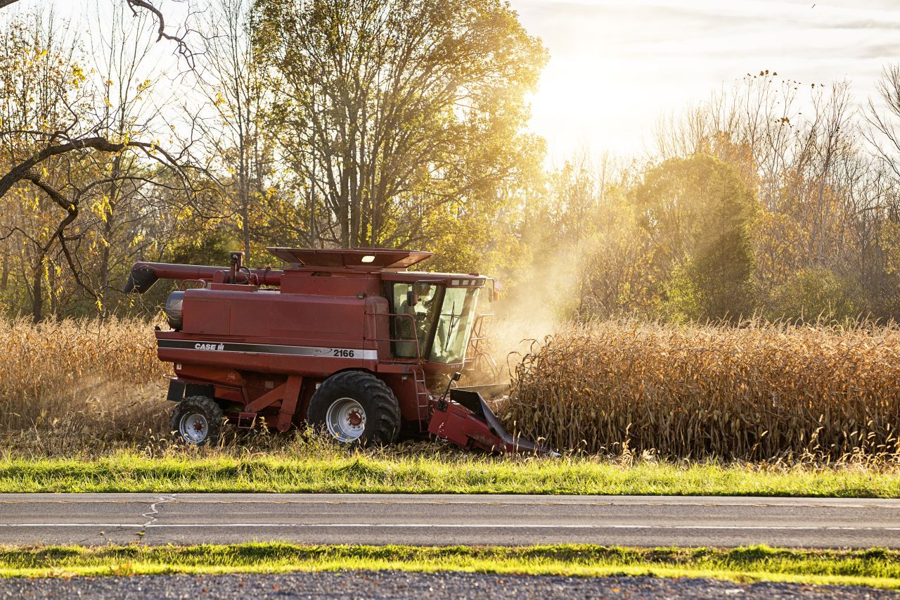 Harvest time as November arrives (photo)